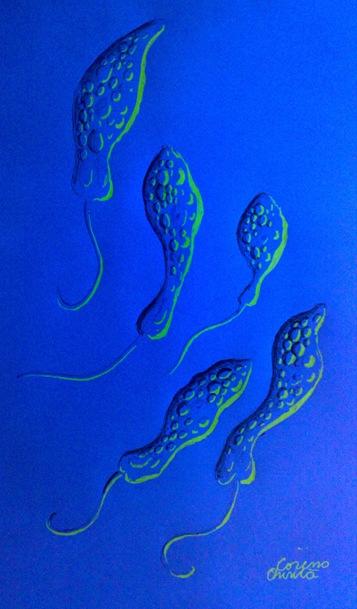 Dansul euglenelor verzi desen fluorescent - Euglena viridis drawing