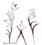 Flori si iluzii optice