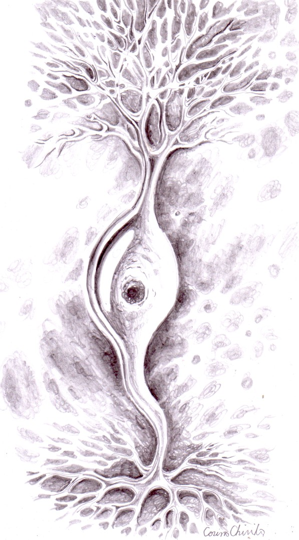 Neuron bipolar, unul dintre desneele mele pe teme biologice