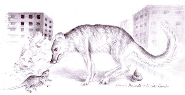 Un desen dedicat tuturor iubitorilor de animale care se opun in mod agresiv de fiecare data cand cineva incearca sa curete Bucurestiul de caini