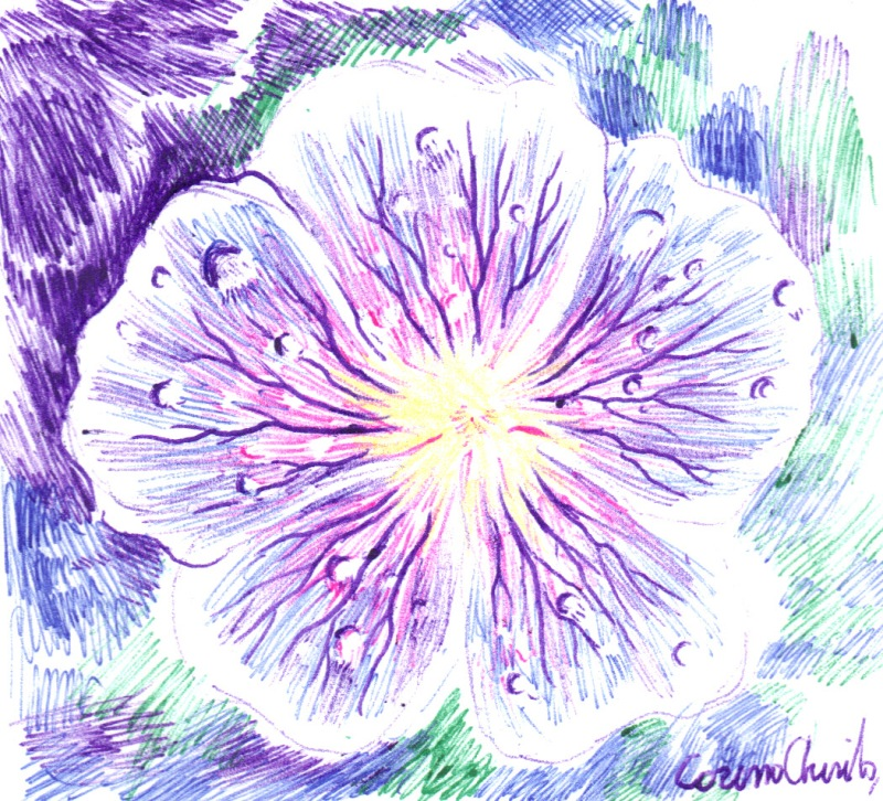 violet-flower-drawing