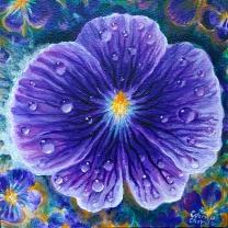 Viola sororia, pictura